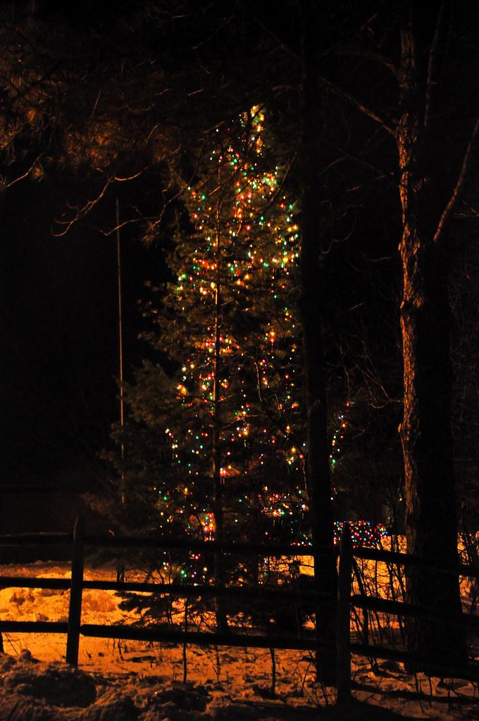 Christmas In The Woods.Christmas In The Woods View From My Bedroom Window Handhe