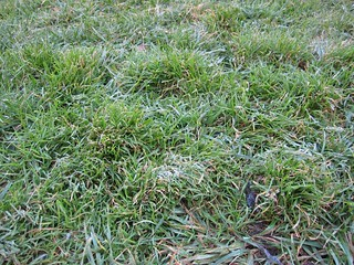 frost on the Berkeley campus   by Esthr