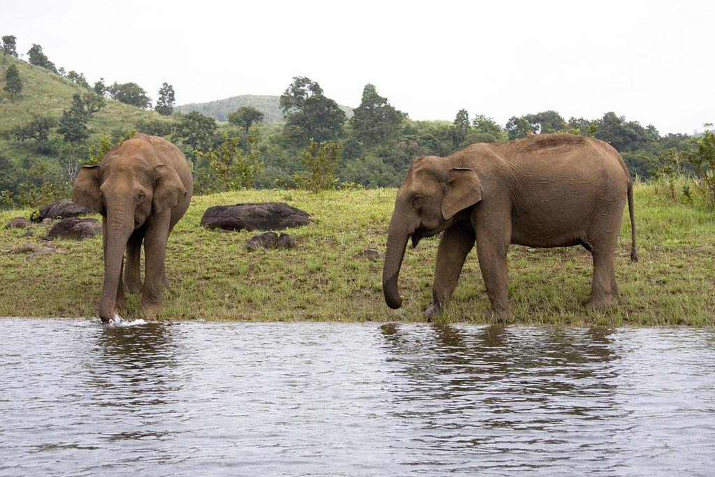 Observation des éléphants depuis la promenade en bateau au lac Periyar