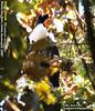 HORNED GUAN 2 leyenda jpg by ecoproyecto