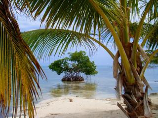 Mangrove island   by CameliaTWU
