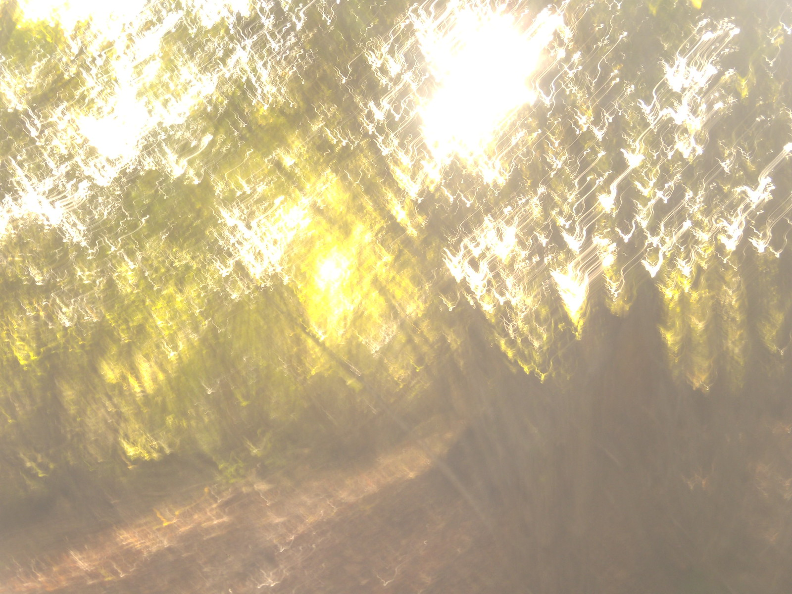 Autumn gold Sevenoaks Circular