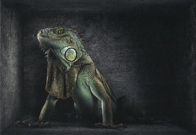 Brazil Rainforest Animal Protection Ad Postcard