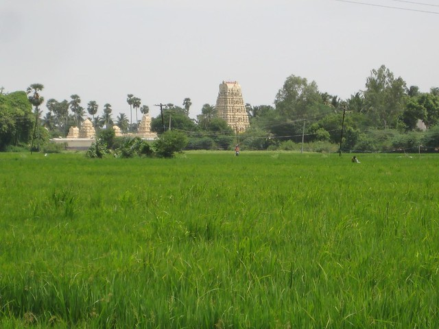 Through the paddy field