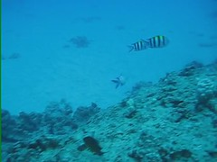 Hawaiian Scuba Diving Video