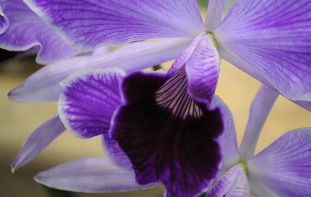 Exposição de Orquídeas - São Bernardo do Campo
