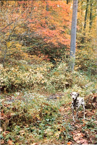 Lost in Fall Colors (1986)