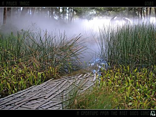 mist water geotagged interestingness australia explore canberra sept11 creature hdr bullrushes explored fineartphotos inexplore scenicsnotjustlandscapes tomraven aravenimage q309 geo:lat=3530003 geo:lon=149138116