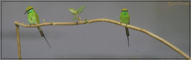 Birds on A Swing