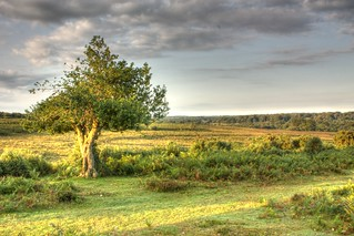 Sunrise in New Forest | by davidgsteadman