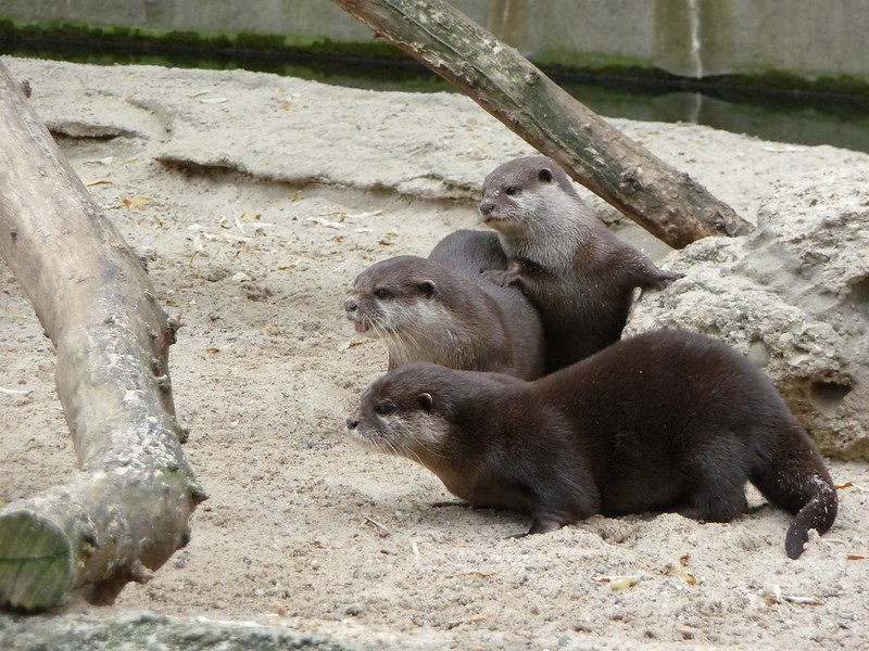 Excited otters