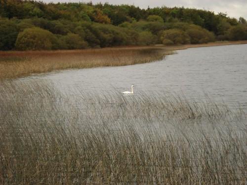ireland wildlife 2009