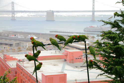 Flock of parrots on a pipe | by ~dgies