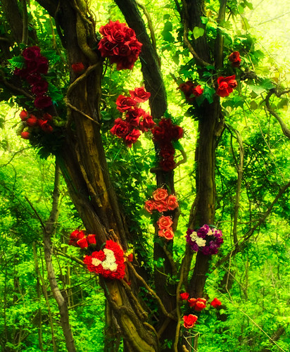 Tree with Roses | by Hexagoneye Photography