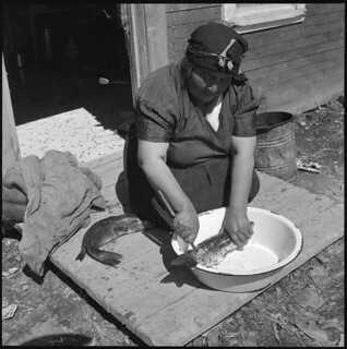 Woman preparing pickerel (walleye) for cooking or smoking at Longlac Reserve