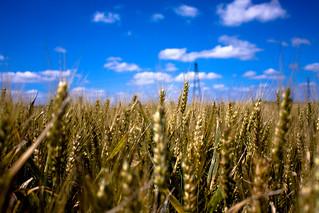 Wheat Field [E-X-P-L-O-R-E-D] | by KevinLallier