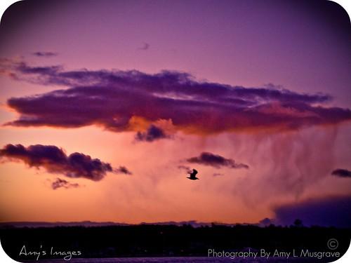 ocean pink blue sunset sea sky cloud sun bird moody novascotia seagull gull sony sydney capebreton atlanticocean fbdg sydneyboardwalk