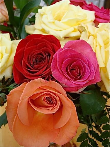 ecuador-roses   by GaryAScott