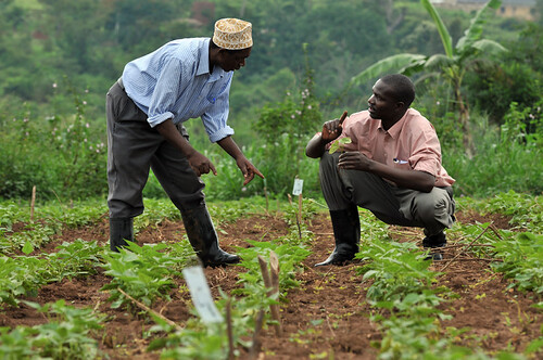uganda field trials2_lo | by CIAT International Center for Tropical Agriculture