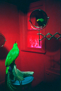 Victory Red Bathroom With Parrot02
