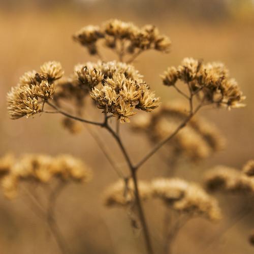 autumn weeds bokeh seeds bej ubej