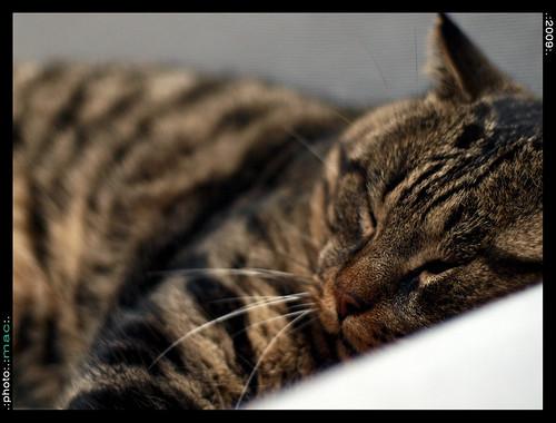 Teo, DAS gatto