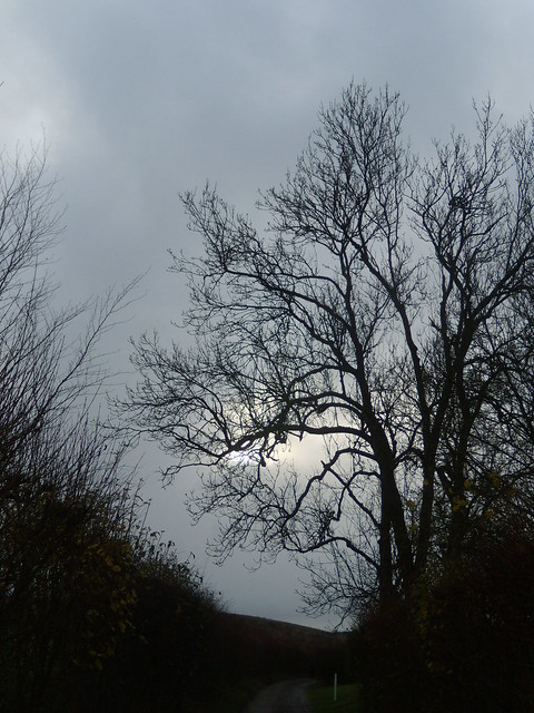 Sun through tree Eynsford to Shoreham
