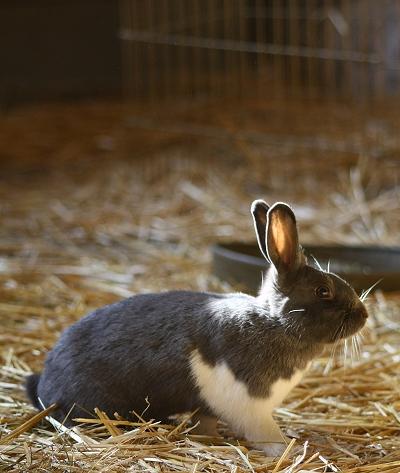 New bunny Lucia
