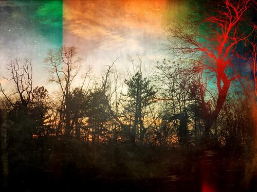 trees mextures textures landscapes