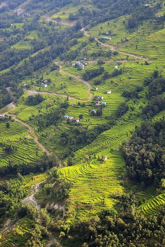 champs montagnes nechabatase nepal préci solukhumbu terrasseterrasses