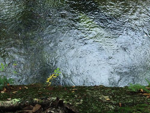 creek   by Dave Bonta