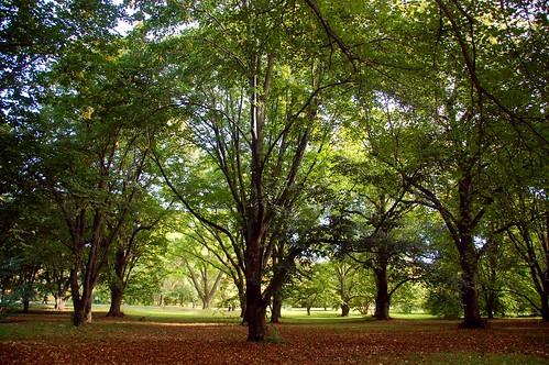 autumn trees tree fall colors leaves boston forest ma leaf massachusetts harvard arnold arboretum foliage harvarduniversity bostonma 2009 arnoldarboretum emeraldnecklace cameranikond50 exif:exposure_bias=0ev exif:exposure=0017sec160 exif:focal_length=18mm treemuseum lens18200vr exif:aperture=f40 camera:make=nikoncorporation exif:flash=offdidnotfire camera:model=nikond50 meta:exif=1257920855 exif:lens=18200mmf3556 exif:filename=dscjpg exif:vari_program=auto exif:shutter_count=36747 meta:exif=1350400844