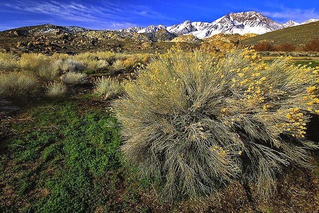 High Sierra Splendor