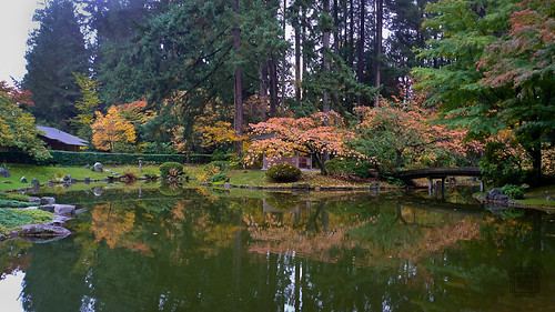 UBC Nitobe Memorial Gardens, fall colours P1070396 by Chris Young 43