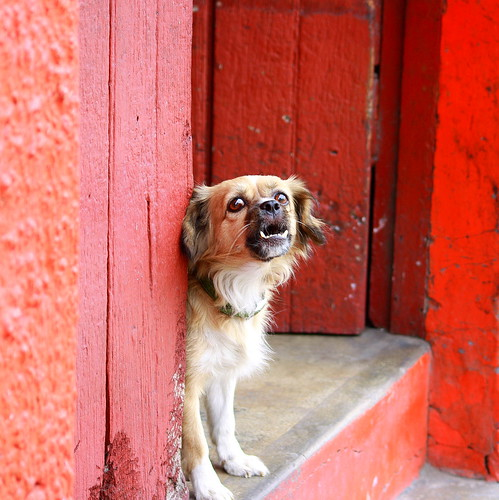 Dog barking, Iquitos | by Brian Moriarty
