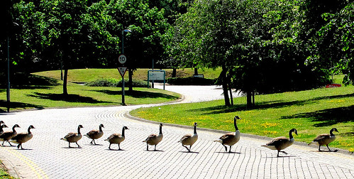 Follow My Leader | by canonsnapper