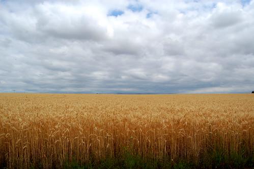 clouds landscape wheatfield willamettevalley salemoregon silvertonoregon edmundgarman