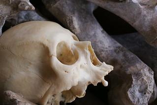 Amongst dirty bones | by Dallas Krentzel