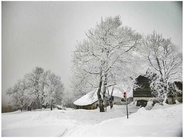 Mont Soleil , Jura Mountains. Canton of Bern, Switzerland.  December 8, 2008 15:30 Izakigur No. 9076.