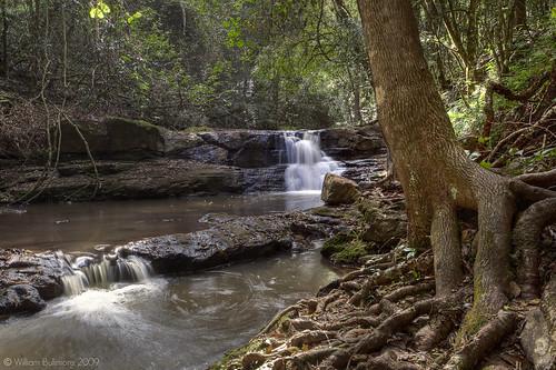 trees nature water creek landscape waterfall stream roots australia killarney queensland treeroots digitalcameraclub brownsfalls atomicaward