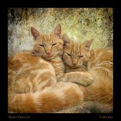 Tender Twins (2) | by Collin Key