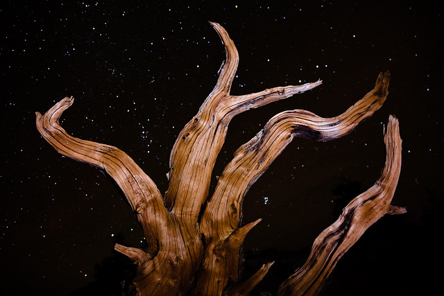 Bristlecone Pine and Starry Sky