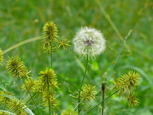 flowers plants nature alabama smörgåsbord panasoniclumix limestonecounty fx50 bkhagar tanneral