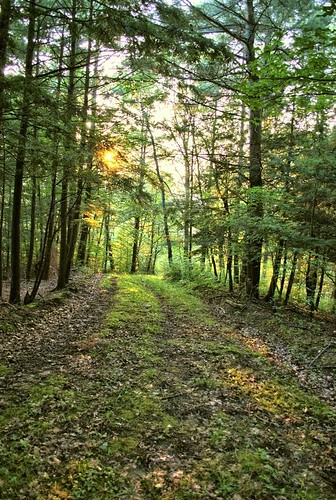 trees sunset summer sun newyork grass leaves forest woods path tracks belfast trail