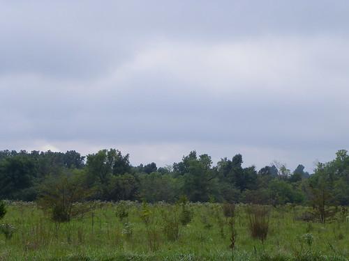 field landscape missouri fields ozarks lebanonmo lebanonmissouri lacledecounty