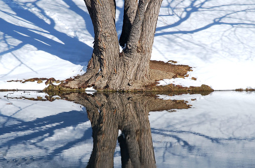 winter snow cold reflection tree water mirror nikon colorado inverness englewood d40x dktrpepr luxtop100 invernessgolf