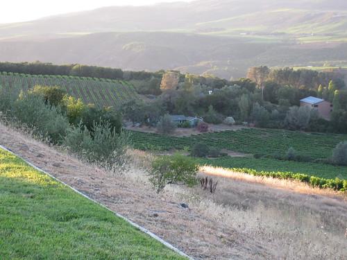 Dusk 2, Napa Valley