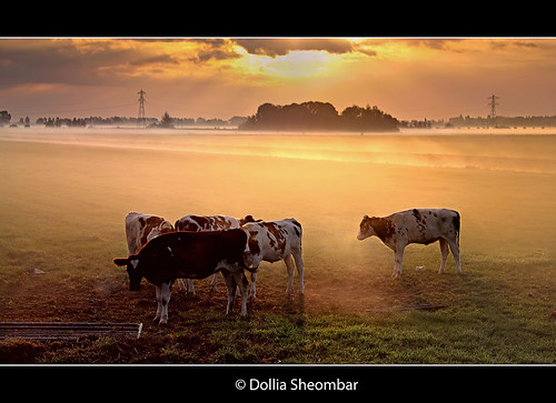 morning light sunset sky sun mist holland color sol nature topf25 colors dutch animal animals fog clouds sunrise canon landscape atardecer photography photo topf50 europe mood nebel cows photos farm nederland thenetherlands meadow wiese atmosphere paisaje explore rays prado prairie typical sunrays topf150 topf100 shining niebla dri brouillard beautifull tuman zuidholland 1755 southholland sonnenaufgan leverdusoleil 100faves 50faves explored canoneos450d dollia dollias sheombar