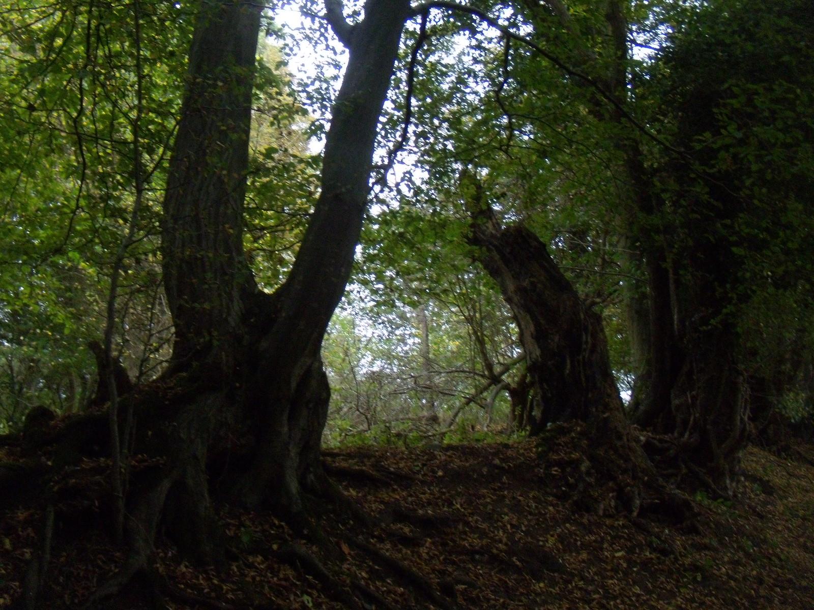 Old hedgerow Watton-at-Stone Circular