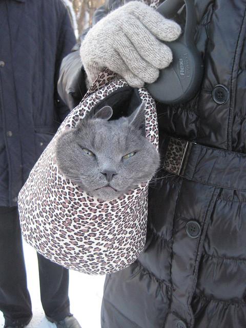 Nestor: It's cold!